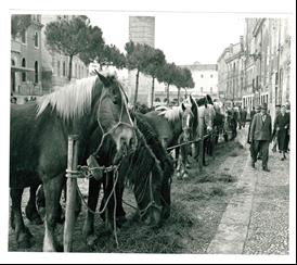 Mostra Di Cavalli In Via Pontedera – Primi '900